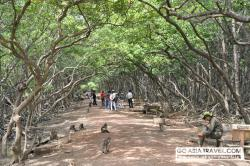 Monkey Island Eco Forest Park Can Gio | Can Gio Mangrove Forest 1 day tour – private tour. Vietnam ...