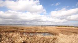 Montrose Basin Local Nature Reserve Fife and Angus | Montrose Basin Nature Reserve | Day Out With The Kids