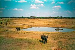 Mukuvisi Woodlands Environmental Centre Harare   f.AK-09 Mukuvisi Woodlands   Elephants at water hole. Pretty…   Flickr