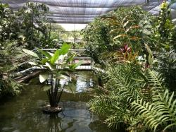 National Orchid Gardens Port Moresby | IN THE FOOTSTEPS OF ROYALTY | Postcards From Dangerous Places