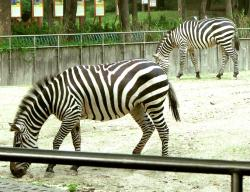 National Zoological Gardens Delhi | national zoological park delhi | Manthan Diary