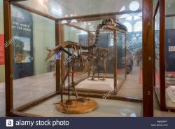 Natural History Museum & Mauritius Institute Port Louis | Mauritius, Capital city of Port Louis. Natural History Museum aka ...