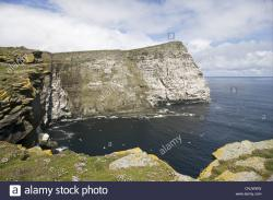 Noss National Nature Reserve Orkney and Shetland Islands | Northern Gannet Morus bassanus breeding colony view sea cliff ...
