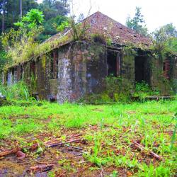 Old Tavern Coffee Estate Section & Clydesdale | Clydesdale Coffee Estate, Clydesdale National Forest Park, Jamaica ...