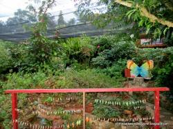 Palawan Butterfly Eco Garden & Tribal Village Puerto Princesa | BUTTERFLY ECO-GARDEN and TRIBAL VILLAGE | The Palaweña Explorer