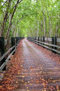 Paseo Piñones El Yunque and the Northeast | 9 best ::Puerto Rico Outdoor Activities:: images on Pinterest ...