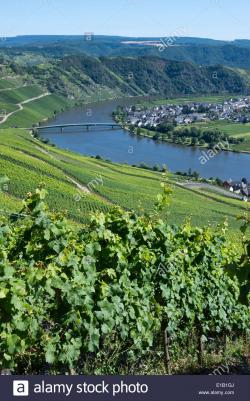 Piesport The Rhineland | view over piesport village at moselle river, rhineland-palatinate ...
