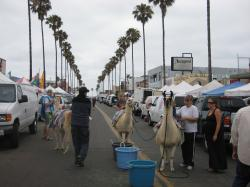 Pizza Port San Diego | Ocean Beach Farmers Market. As eclectic as the town it's in. And ...