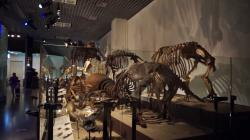 Place M Tokyo | National Museum of Nature and Science,Tokyo Japan. Dinosaur Animal ...