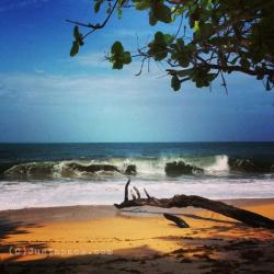 Playa Punch Playa Bluff & Around | 164 best Caribbean Cravings images on Pinterest | North america ...