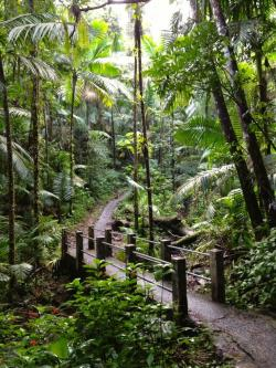 Villa Marina El Yunque and the Northeast | 393 best Puerto Rico: Places and Towns images on Pinterest ...