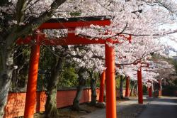 Port of Kōbe Earthquake Memorial Park Kōbe | Kyoto's 10 Best Cherry Blossom Viewing Spots – JW Web Magazine