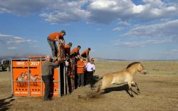 Research station Khövsgöl Nuur National Park | Rare wild horses are making a stunning return to Mongolia | Meebzly