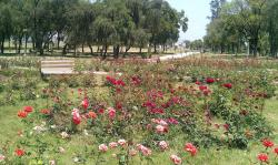 Rose & Jasmine Garden Islamabad & Rawalpindi | Panoramio - Photo of Rose and Jasmine Garden Islamabad