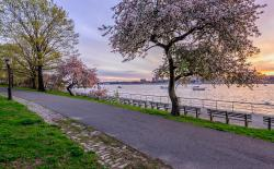 Rubin Museum of Art New York City | Riverside Park on the Upper West Side, crab apple trees, Spring ...