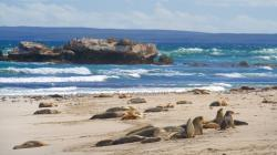 Seal Bay Conservation Park South Coast Road | Seal Bay Conservation Park Pictures: View Photos & Images of Seal ...