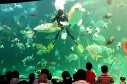 Songkhla Aquarium Songkhla & Around | Panoramio - Photo of @Songkhla Aquarium