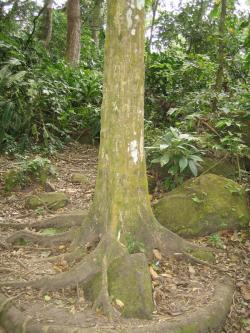Square-Trunked Trees El Valle | Valentine's Day in El Valle | Brandon's Blog. Note: THIS SITE IS ...