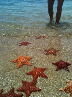 Starfish Beach Vieques | Vieques Beach Bums: Star Fish Beach on the Beautiful Vieques Island