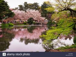 Super Dry Hall Tokyo | Cherry blossom reflecting in a lake at Shinjuku Gyoen National ...