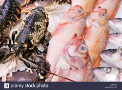 Swansea Market South Wales | Red Gurnard, live lobster and sea bass for sale on fishmongers ...