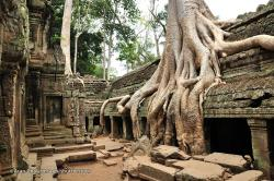 Ta Keo Temples of Angkor | Ta Promh Temple - Things to Know About Ta Promh