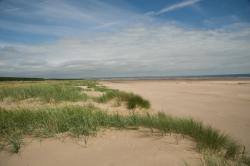 Tentsmuir Forest and Beach Fife and Angus | Fife business - Tentsmuir Forest and Tentsmuir National Nature Reserve