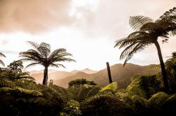 The Organic Co-op The Coromandel and the Bay of Plenty | The road less travelled: How to avoid the tourist hordes this ...