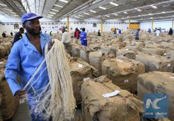 Tobacco Floor Harare | Feature: Partnering Chinese, Zimbabwe tobacco farmers embark on ...