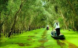 U Minh Cajeput Forest Mekong Delta | 9) Boat tour around Flooded forest: The Mekong Delta bucket list ...