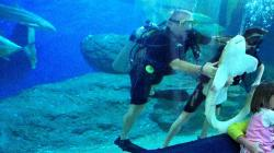 Underwater World Pattaya Pattaya | Underwater World Pattaya - YouTube