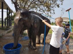 Wildlife Friends Foundation Thailand Rescue Centre and Elephant Refuge Hua Hin | Wildlife Friends of Thailand (Tha Yang): Top Tips Before You Go ...