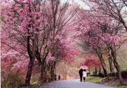 Wuling Farm Wuling Forest Recreation Area | Popular forest parks in Taiwan | Photo Essays | Forum | FOCUS ...
