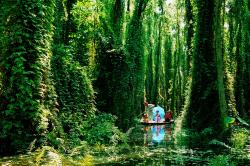 Xeo Quyt Forest Cao Lanh | Xeo Quyt Forest - Asiatourpackages