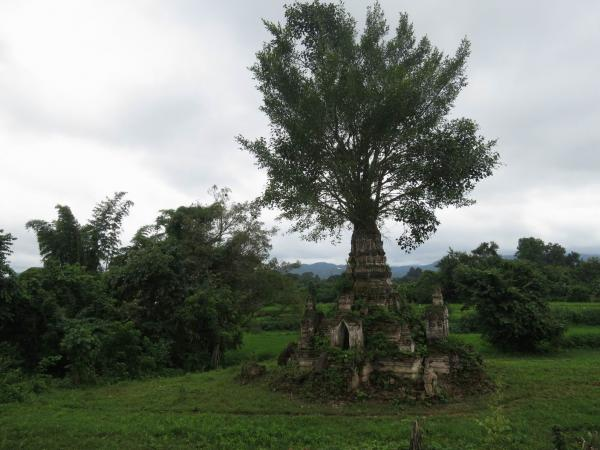 Banyan Tree Nat Shrine Hsipaw