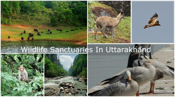 Govind Wildlife Sanctuary & National Park Uttarakhand