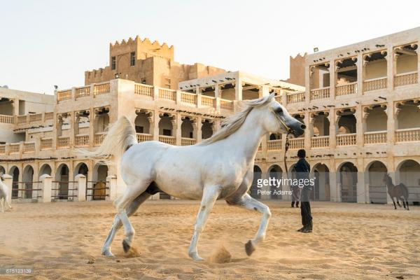 Horse Stables Doha
