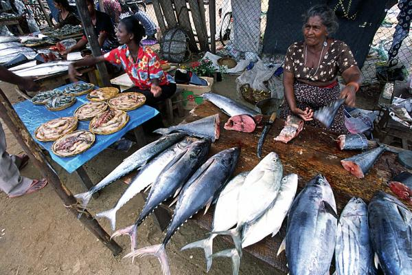 Main Fish Market Negombo