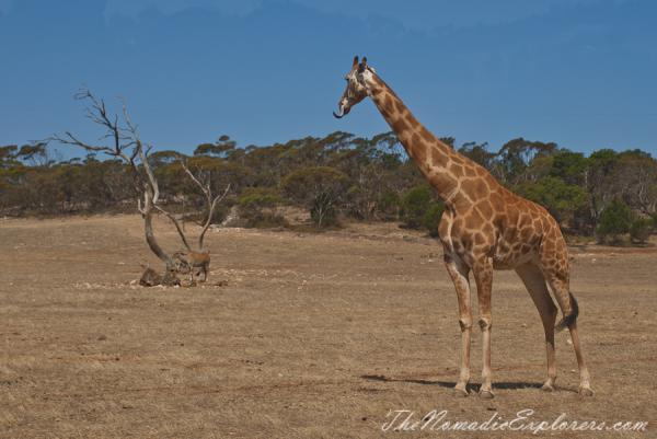 Monarto Zoo Murray Bridge