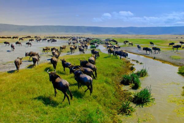 Ngorongoro Crater Ngorongoro Conservation Area